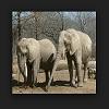 Eléphants qui rebondissent