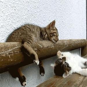 Gamelle mignonne de chaton