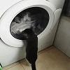 Minou et la machine à laver