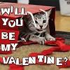 Saint Valentin avec minou