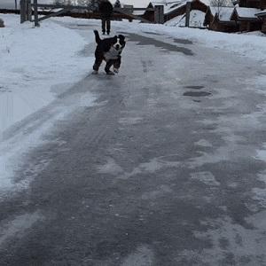 Chien sur la glace
