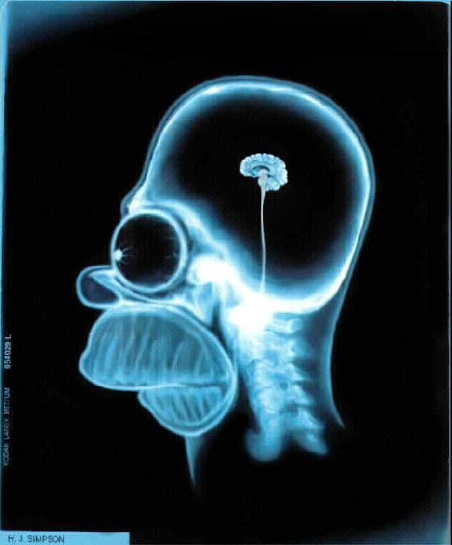 Taille du cerveau d'Homer Simpson
