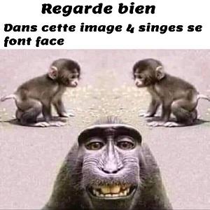 Humour primate