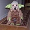 Chien en Maître Yoda