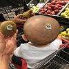 Bébé kiwi