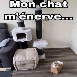 chat énervant
